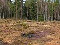 Naturpark Heidenreichsteiner Moor 2009-04 1.jpg