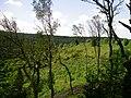 Naturschutzgebiet Schwalmtal - panoramio.jpg