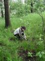 Naukowiec podczas pobierania próbki gleby.png