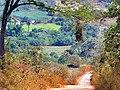 Ninho de garrafão - panoramio.jpg