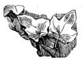 Noções elementares de archeologia fig171.png