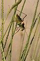 Nostres amics, els insectes - Nuestros amigos, los insectos - Friends insects (5168458735).jpg
