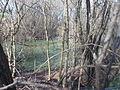 Oasi levadina bosco igrofilo.JPG