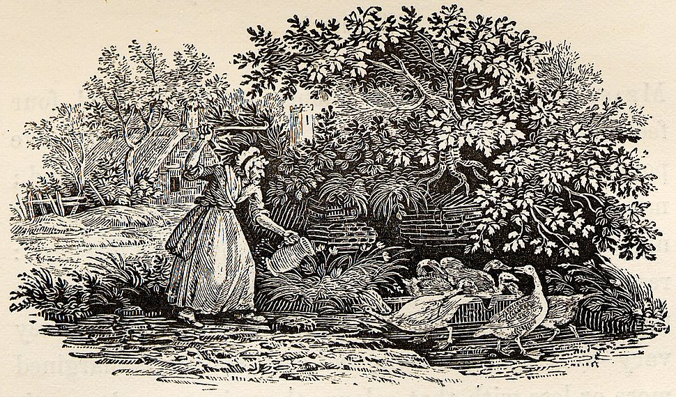 Old Woman with Ducks tail-piece in Bewick British Birds 1804