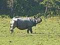 One horned Rhino .jpg