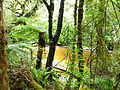 Oparara Basin the River 1.JPG