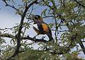 Orange 2 Bird 3120.jpg