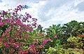 Orchid Gardens Bali, Indonesia - panoramio (3).jpg