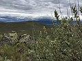 Oregon Trail Center 25th Anniversary! (34202779943).jpg