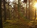 Orsa Ö, Sweden - panoramio - DalaCyklist.jpg