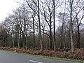 Ostenfeld bei Husum 12.jpg