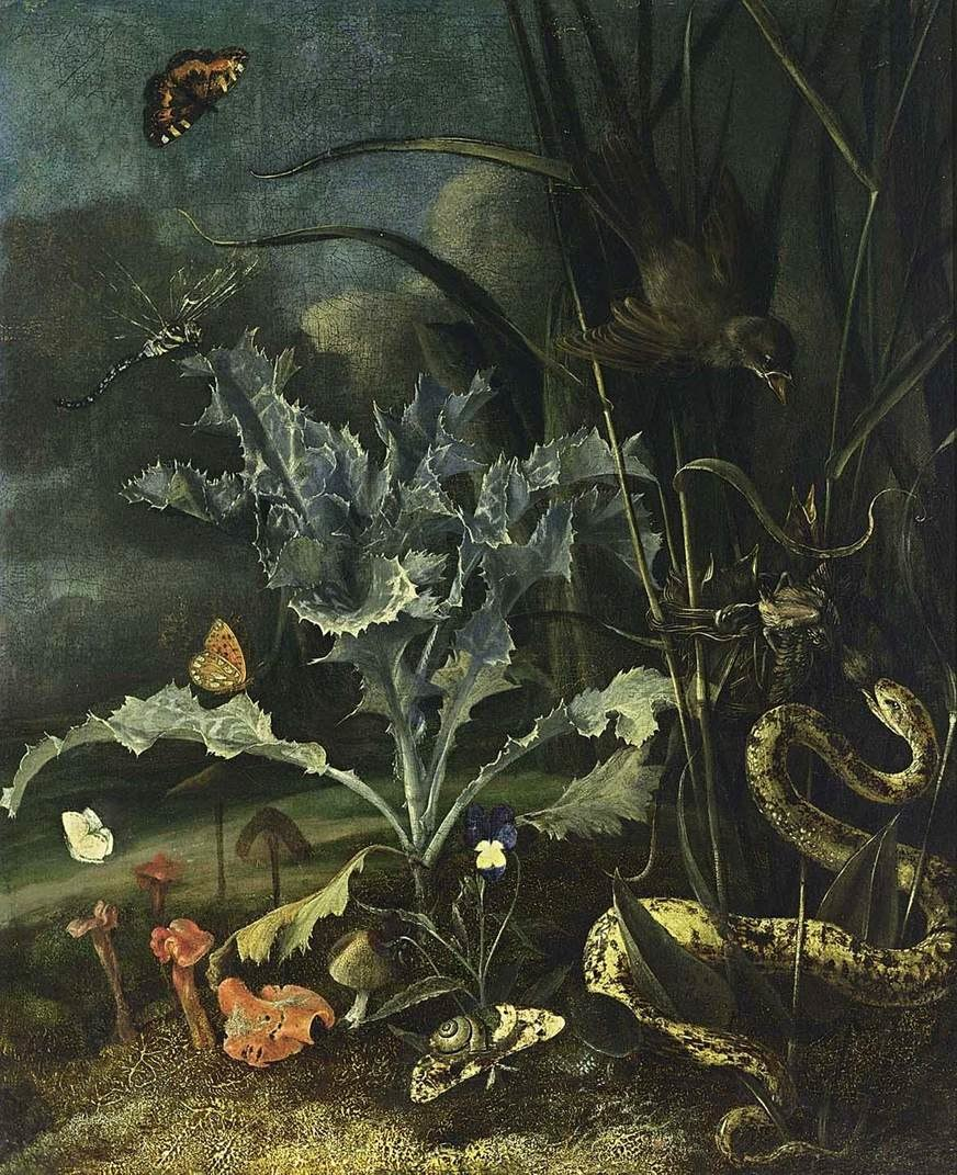 Otto Marseus van Schrieck - A Forest Floor Still-Life - WGA21061