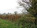 Overgrown ditch west of Fersfield - geograph.org.uk - 1576984.jpg
