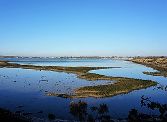 Hayling Island - Oyster beds in Hayling Island
