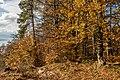 Pörtschach Niedere Gloriette Waldwanderweg 05112017 1888.jpg