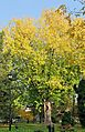 PL-PK Mielec, Park Oborskich 2013-10-13--15-50-20-001.jpg