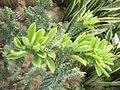 PanYu Clifford Farm Plant 06 Cactus.jpg