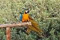 Paphos Zoo, Cyprus - panoramio (34).jpg