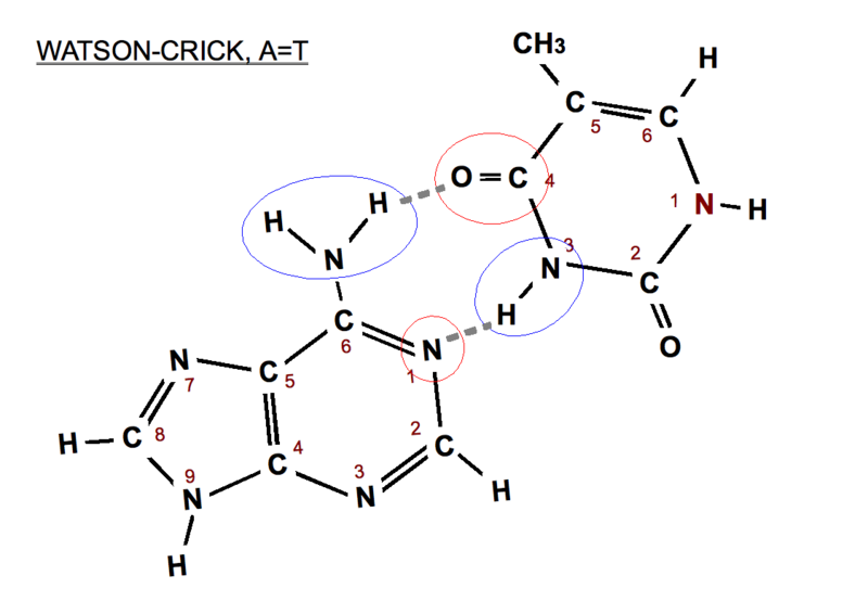 estructura ciclica comun para los esteroides