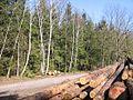 Parforceheide Holz2.JPG
