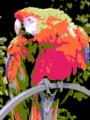 Parrot appleii.png