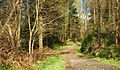 Path, Castlewellan Forest Park (2) - geograph.org.uk - 1247362.jpg