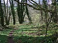 Path, Quarry Wood - geograph.org.uk - 742342.jpg