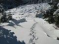 Pe traseu pe Muntele Mănăileasa - panoramio.jpg