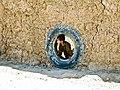 Peek-a-Boo (4405458297).jpg