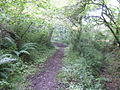 Pembrokeshire Coast Path - geograph.org.uk - 525618.jpg