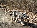 Pes v Klánovickém lese.jpg