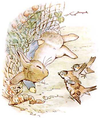 PeterRabbit14.jpg