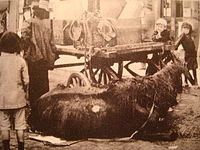 Petrograd in 1919 dying horse on the street.JPG