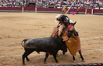 Goggles - Bullfighting horse wearing eye protection