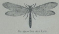 Picture Natural History - No 270 - The Ant Lion.png