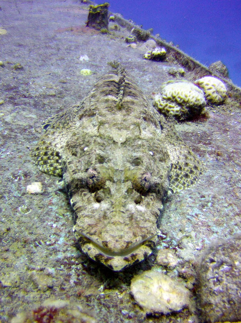 דג תנין על סיפון הסטיל