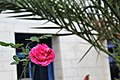 Pink flower0.jpg