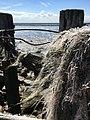 Plastikfäden im Meer.jpg