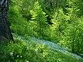 Ples Spring - panoramio.jpg