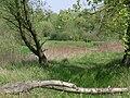 Poland. Gmina Konstancin-Jeziorna. Vistula 029.jpg