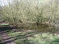 Pond, Hearsall Common - geograph.org.uk - 370149.jpg