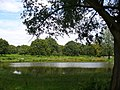 Pond by White Ash Lodge - geograph.org.uk - 507414.jpg
