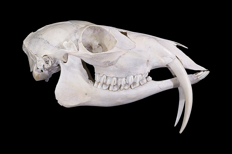 Fish Bone Dog Collars