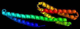Catenin alpha-1