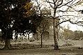 Purana Qila Sher Mandal.jpg