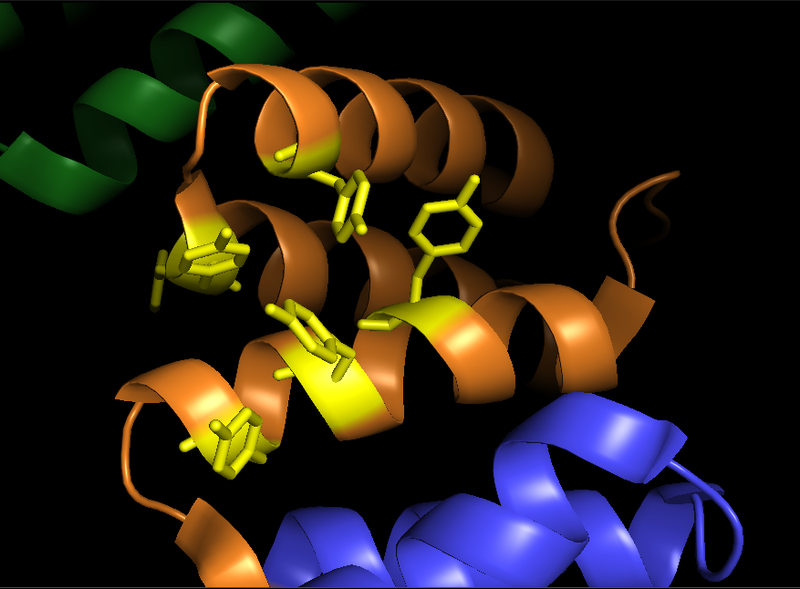 File:Pymol image of the substrate binding groove of the alpha subunit of prolyl hydroxylase.png