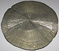 Pyrite concretion (Anna Shale, Middle Pennsylvanian; Sparta area coal mine, Illinois, USA) 5.jpg