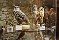 QRpedia codes in Silesian Museum Opava 03.JPG