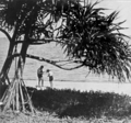 Queensland State Archives 1019 A Coral Strand Green Island near Cairns c 1931.png