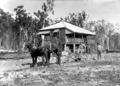 Queensland State Archives 2611 Returned soldiers ploughing Beerburrum July 1917.png